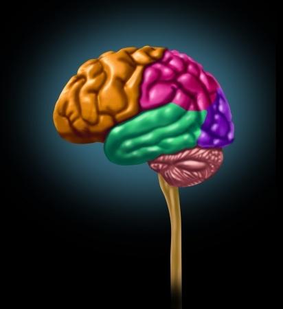 דיקור קרקפת יפני בשיטת YNSA - השפעה על המוח ומערכת העצבים המרכזית